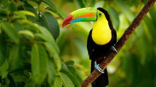 Splendeurs du Panama et du Costa Rica