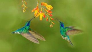 Envolée sauvage au Costa Rica