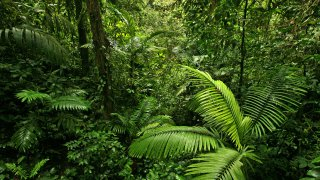 Costa Rica, luxe, jungle et volupté