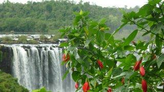 Argentine, des chutes d'Iguazu à la jungle
