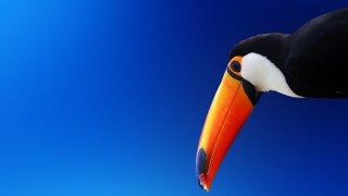 La Colombie et ses oiseaux du paradis