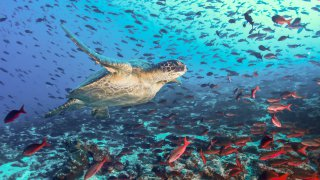 Merveilles marines des Galapagos