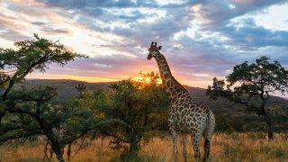 La Namibie à bord du Pride of Africa