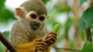 Ecolodges et forêt luxuriante du Costa Rica