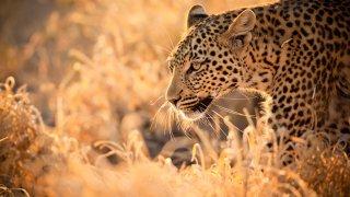 Découverte et safari d´exception du Cap au Kalahari