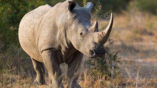 Splendeur et Excellence du Botswana