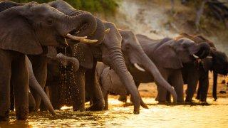 Botswana et Zambie: safaris au fil de l'eau